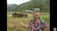 Riding elephants > https://rantsforchange.com/2015/12/21/colette-nevin/